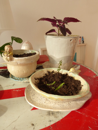 plantitastiestos